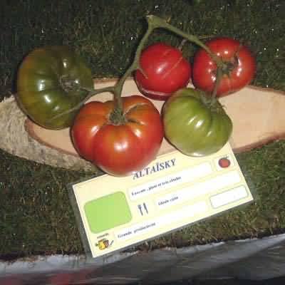 Tomate Altaïski