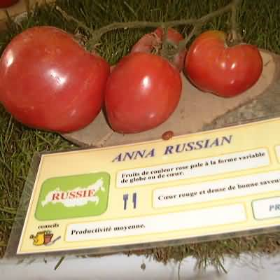 Tomate Anna russian