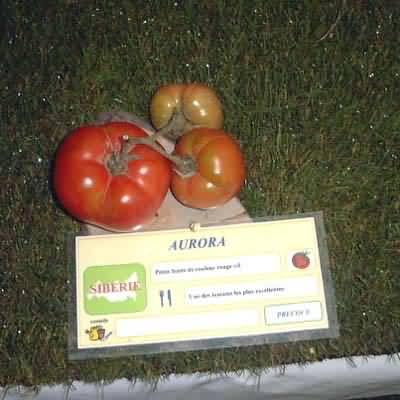 Tomate Aurora