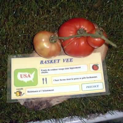 Tomate Basket Vee
