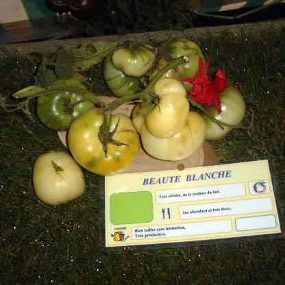 Tomate Beauté Blanche