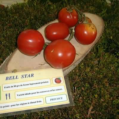 Tomate Bell star