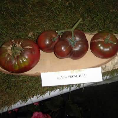 Tomate Black from Tulu