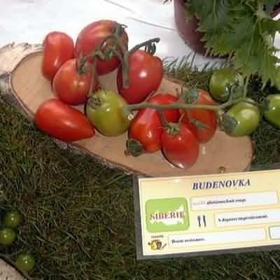 tomate Budenovka