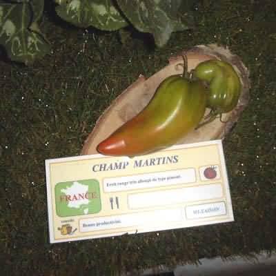Tomate Champ Martin