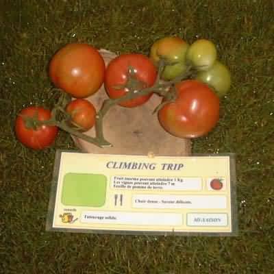 tomate Climbing Trip