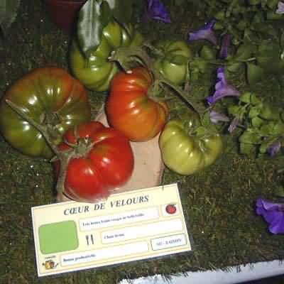 tomate Coeur de velours