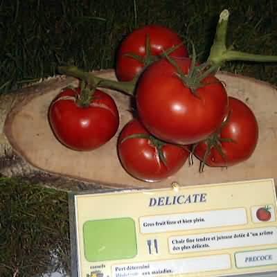 tomate Delicate