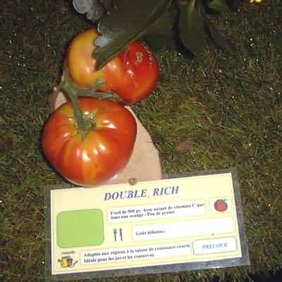 tomate Double Rich