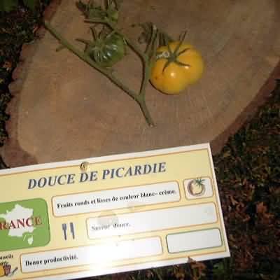 tomate Douce de Picardie