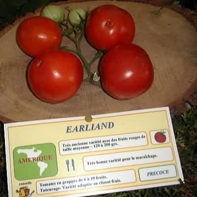 tomate Earliand