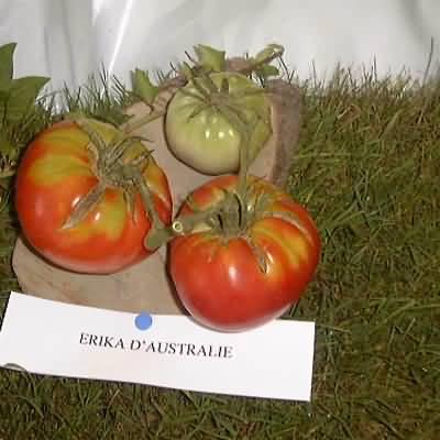 tomate Erika d'Australie
