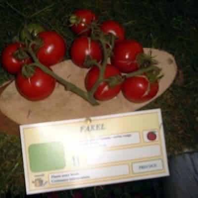 tomate Fakel