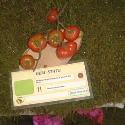 tomate Gem State