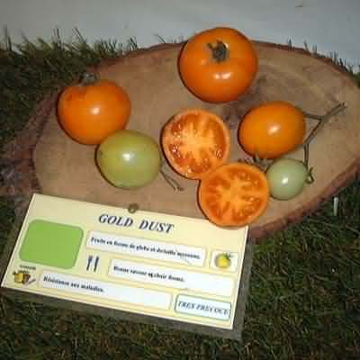 tomate Gold Dust