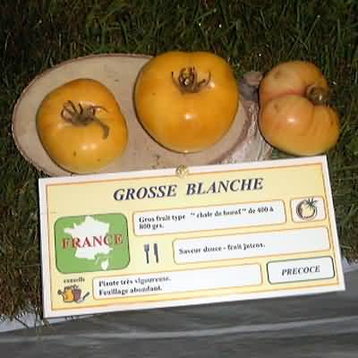 tomate Grosse blanche