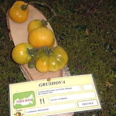tomate Grushova