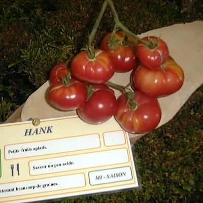 tomate Hank