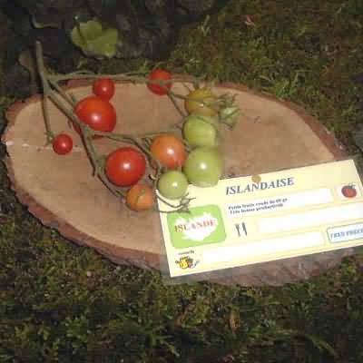 tomate Islandaise