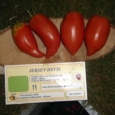 tomate Jersey Devil