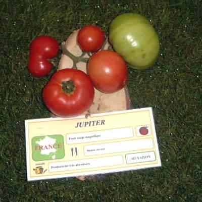 tomate Jupiter