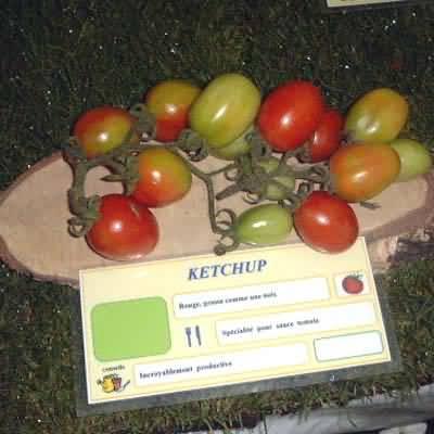 tomate Ketchup