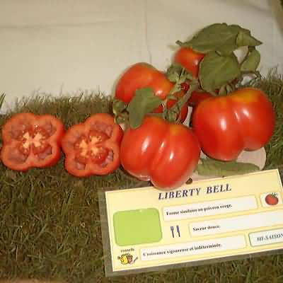 tomate Liberty Bell