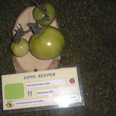 tomate Long Keeper