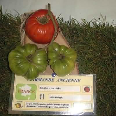 tomate Marmande ancienne