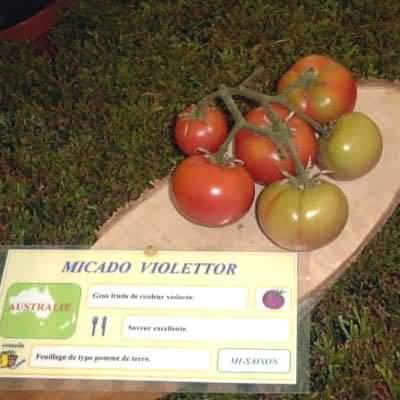 tomate Micado Violettor