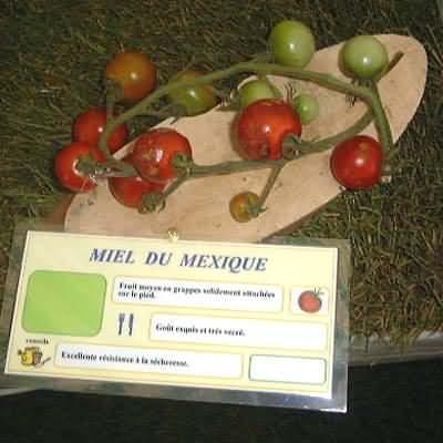 tomate Miel du Mexique
