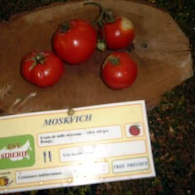 tomate Moskvich