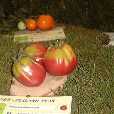 tomate New Zealand Pear