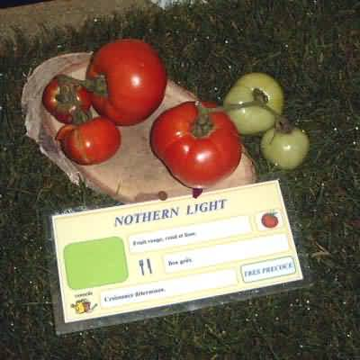 tomate Nothern Light