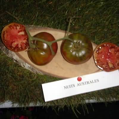 tomate Nuits australes