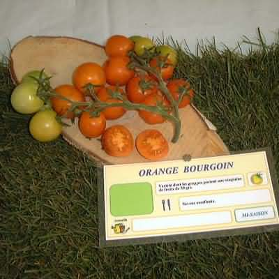 tomate Orange Bourgouin