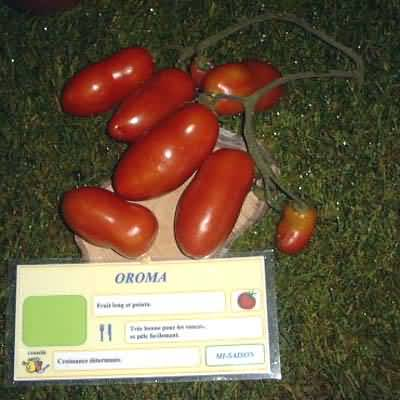tomate Oroma