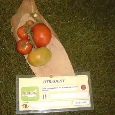 tomate Otraolny