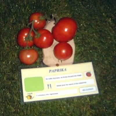 tomate Paprika