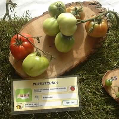 tomate Perestroïka