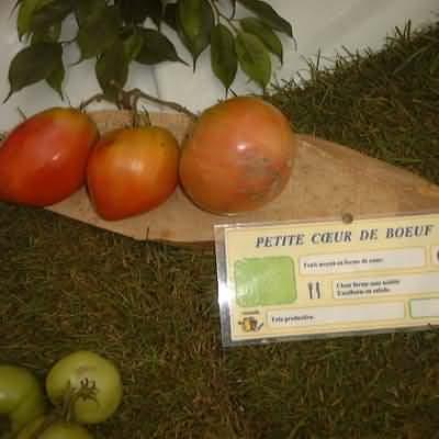 tomate Petite coeur de boeuf