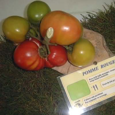 tomate Pomme rouge