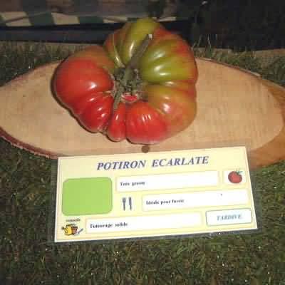 tomate Potiron Ecarlarte