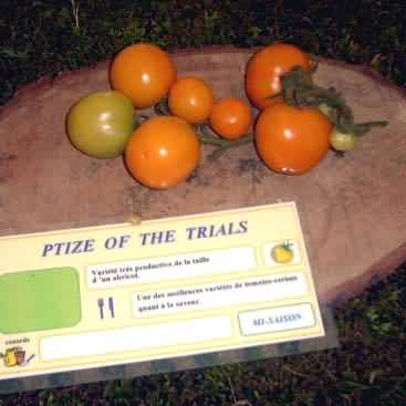 tomate Ptize of the Trials