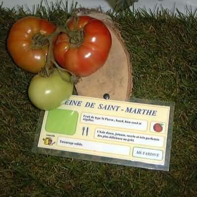 tomate Reine de Sainte Marthe