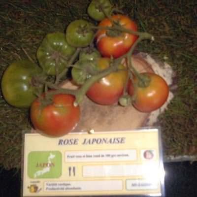 tomate Rose Japonaise
