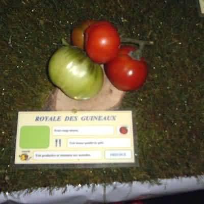 tomate Royale des Guineaux