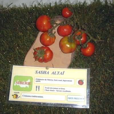 tomate Sasha Altaï