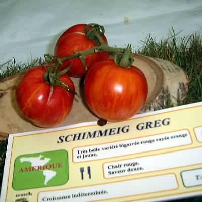 tomate Schimmeig Greg