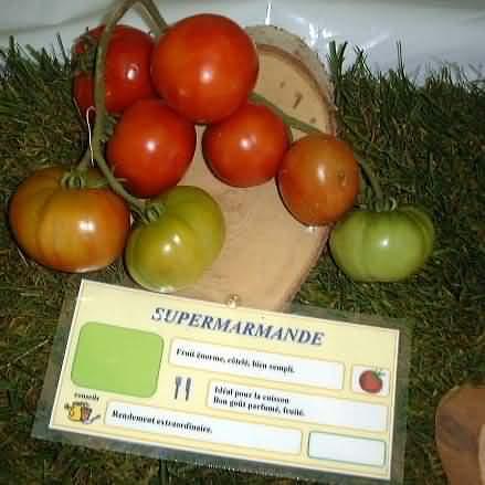tomate Supermarmande